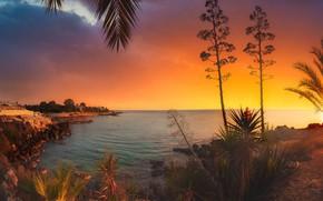 Picture sea, leaves, landscape, sunset, branches, nature, palm trees, coast, vegetation