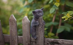Picture nature, animal, the fence, baby, cub, kitty, Yuriy Korotun
