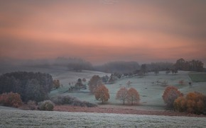 Picture the sky, trees, fog, dawn, field, morning, forest, frost