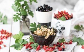 Picture berries, bowl, currants