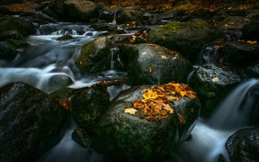 Picture stream, stones, waterfall, yellow, river, maple, stones, leaves. autumn