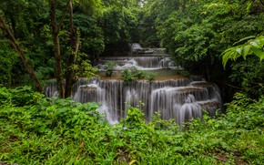 Picture greens, forest, summer, branches, foliage, view, waterfall, cascade