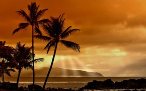 Picture sunset, tropics, palm trees, the ocean, shore, the evening