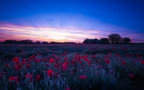 Picture field, Maki, the evening