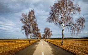 Picture road, field, birch
