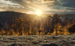 Picture autumn, forest, trees, sunset, Germany, Germany, Baden-Württemberg, Baden-Württemberg, Black Forest, The black forest
