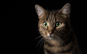 Picture cat, eyes, background