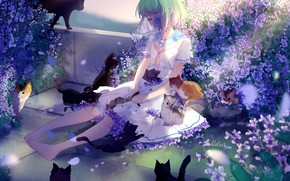 Picture sadness, cats, girl, kittens, green hair, lilac flowers, barefoot, sailor, lluluchwan