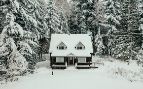 Picture winter, forest, snow, trees, nature, house