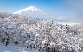 Picture winter, forest, the sky, snow, trees, fog, mountain, the volcano, Japan, Fuji, Fuji