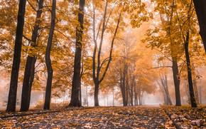 Picture autumn, leaves, trees, Park, nature, park, autumn, leaves, tree
