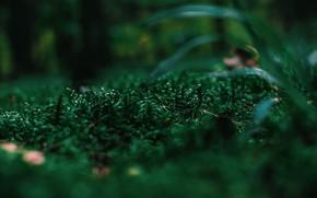 Picture Nature, Plant, Plants, Nature, Grass, Flora, Plants, Flora, Plant, Close-Up, Irina Iriser, by Irina Iriser, …