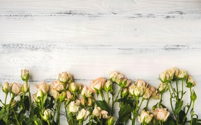 Picture background, roses, bouquet, wood