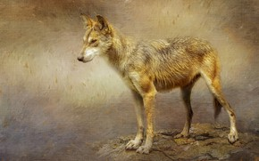 Picture background, wolf, treatment, texture, is, coyote