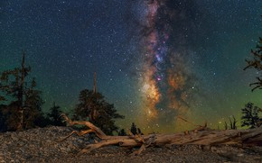Picture landscape, night, nature, beauty, log, Milky Way