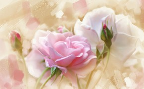 Picture background, tenderness, rose