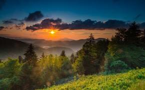 Picture dawn, morning, USA, North Carolina, mount Mitchell