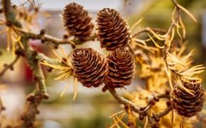 Picture autumn, branches, nature, blur, needles, bumps, bumps