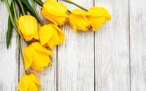 Picture bouquet, yellow, tulips, wood, tulip, bouguet, Olena Rudo