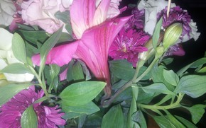 Picture Flowers, Leaves, Buds, A lot, Alstremeria, Asters
