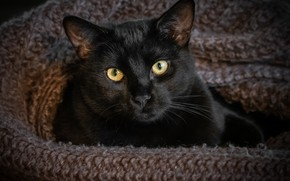Picture eyes, cat, look, black
