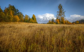 Picture field, autumn, the sky, grass, clouds, trees, nature, blue, meadow, the forest