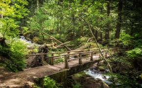 Picture greens, forest, landscape, bridge, nature, river, beauty