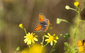 Picture macro, flowers, background, pattern, butterfly, orange, yellow, insect, wings, blurred