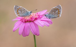 Picture flower, butterfly, a couple