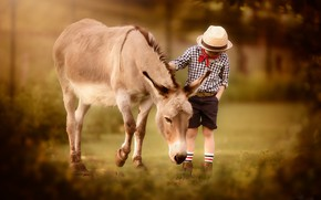 Picture nature, boy, donkey