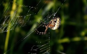 Picture summer, web, spider