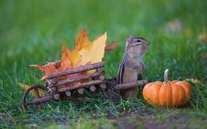 Picture autumn, grass, leaves, nature, harvest, pumpkin, truck, Chipmunk, wooden, stand, cheeks