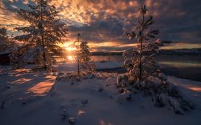 Picture winter, snow, trees, sunset, lake, ate, Norway, Norway, RINGERIKE, Ringerike