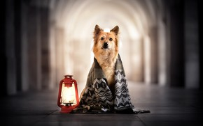 Picture each, lamp, dog, scarf