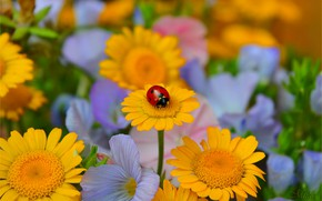 Picture Flowers, Ladybug, Flowers