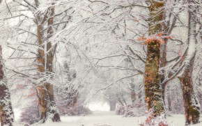 Picture winter, forest, snow, fog