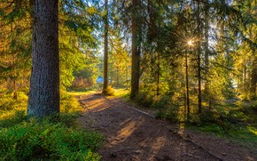 Picture autumn, forest, summer, the sun, rays, light, trees, branches, Park, trunks, Bush, ate, track, pine, …