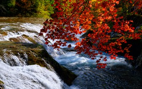 Picture autumn, leaves, shore, foliage, waterfall, red