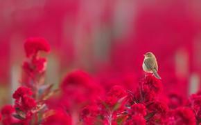 Picture summer, flowers, bird