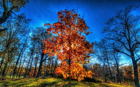 Picture autumn, the sky, the sun, trees, HDR, autumn