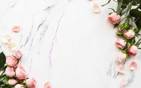 Picture roses, petals, pink, bouquets, Olena Rudo