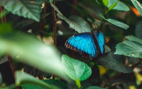 Picture leaves, the dark background, butterfly, blue