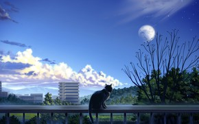 Picture cat, trees, the city, balcony