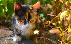Picture Look, Cat, Cat