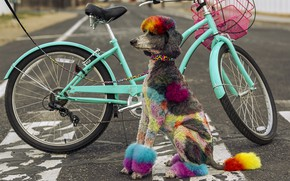 Picture bike, street, dog