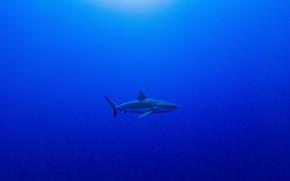 Picture shark, abyss, shark, abyss, Serge Melesan