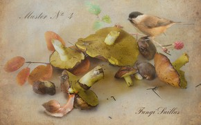 Picture autumn, mushrooms, snail, branch, tit, boletus, Botanical album