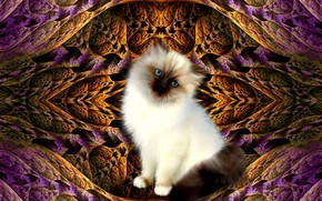 Picture pattern, kitty, 3D graphics