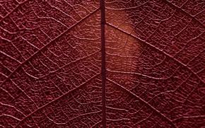 Picture macro, sheet, veins
