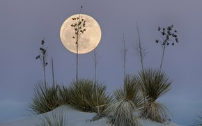 Picture desert, The moon, USA, New Mexico, White Sands, White Sands National Monume
